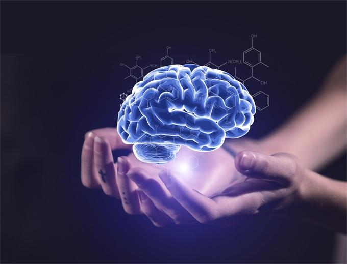 美国和荷兰的科学家研究发现:大脑越大的人记忆力、逻辑和反应能力也更好