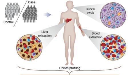 """""""CellDMC""""的新型统计算法:有助于识别与疾病相关的表观遗传通路"""