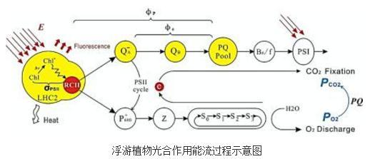 荧光动力学法:浮游植物初级生产力的准确测量新途径