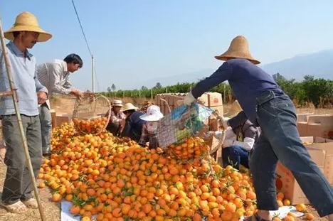 柑橘怎样保鲜?柑橘贮藏保鲜技术全解析!