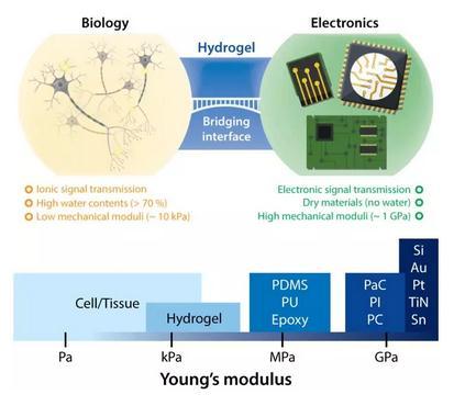 一系列水凝胶生物电子学未来发展的方向