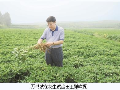 """山东农科院万书波:创建""""玉米/花生间作模式""""等花生高产技术"""