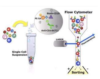 CD19 CAR-T细胞治疗B-ALL患者效果研究