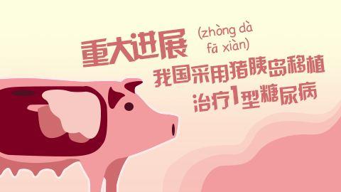 异种移植:猪器官移植人体没有伦理问题