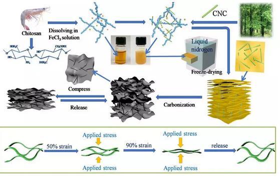 纤维素纳米晶体制备了一种新型全生物质弹性碳材料