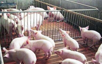 农业农村部对三地非洲猪瘟疫区解除封锁