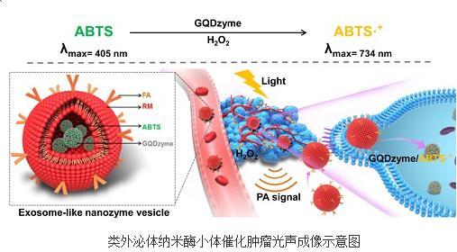 利用纳米酶的酶学催化特性实现了鼻咽癌移植瘤的光声成像