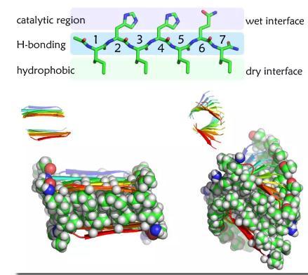 氨基酸序列、自组装结构与活性功能之间的复杂关系研究