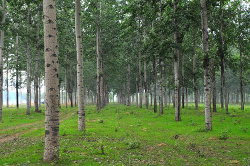 四川国有林场改革基本完成