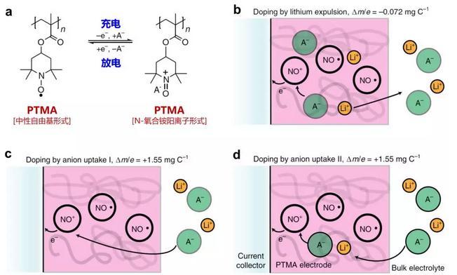 氮氧自由基聚合物电池正极在储电过程中离子传导的行为