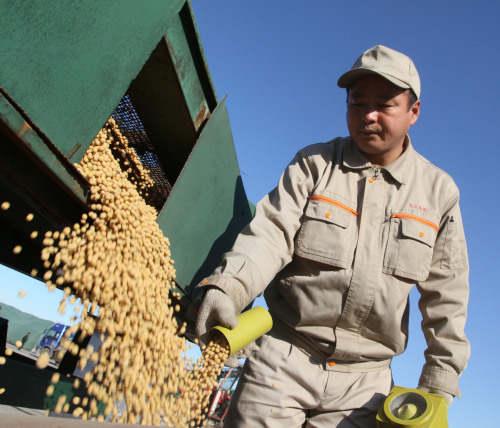 中国11月的美国大豆进口降至零,买进507万吨巴西大豆