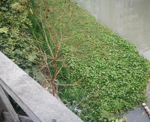 ?城市河水富营养化怎么解决