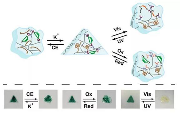 二噻吩乙烯作为非共价型可控桥连的多响应DNA水凝胶的形状记忆调控