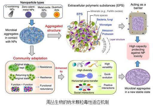 周丛生物对污染物的毒性适应机制和去除技术系列研究进展