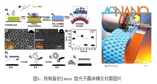 一种Janus型聚共聚物反蛋白石光子晶体膜