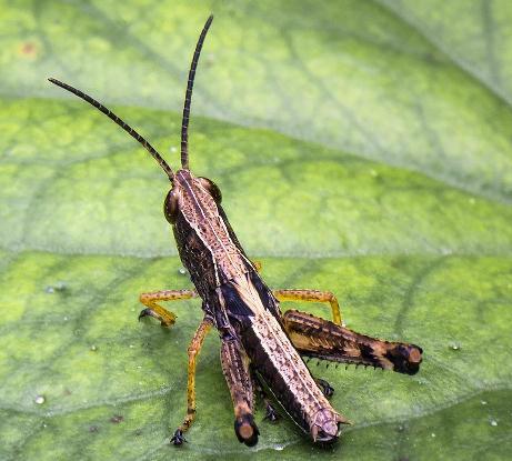 """昆虫控制新手段:新型""""精确制导""""的昆虫不育技术"""