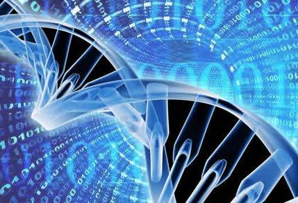 """10x Genomics测序""辅助""三代测序""的混合组装策略和软件技术"