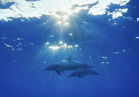 全球海洋变暖速度比之前国际组织预估的要快12%至21%