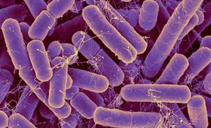 肠道细菌经过分析得出结论:微生物群能够预测大多数人的年龄