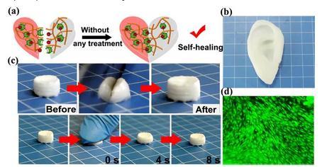 """三臂""""主客体超分子可制备3D打印的高强度主客体生物高分子水凝胶"""