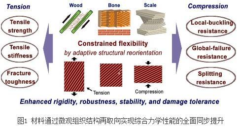 人造材料如何改善抵抗疲劳断裂的能力?