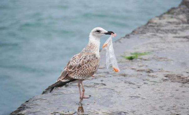 塑料污染目前没有强有力的解决方案 但回收必不可少