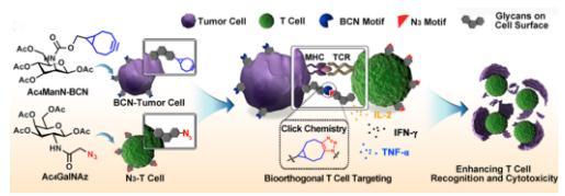 基于生物正交代谢的T细胞靶向策略提高其对肿瘤细胞的识别及杀伤