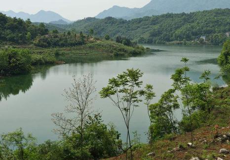 水生植物调控生长的影响因素,湖泊沉水植物调控技术