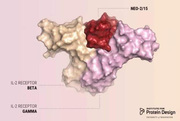 科学家首次实现从头设计合成抗癌蛋白药物