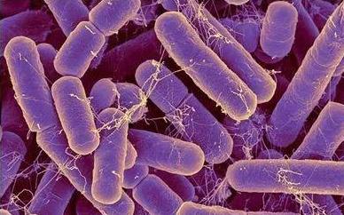 Zhavoronkov研究团队研究发现肠道细菌或能准确的揭示真实年龄