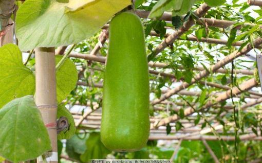 印度、加拿大、以色列等国家农业生物技术年度报告