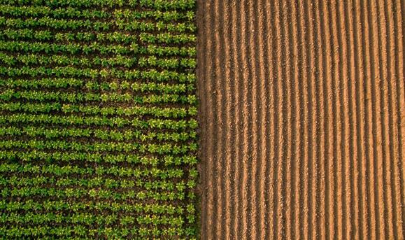 YuxinMiao博士利用光传感器帮助种植者合理优化农作物的健康生长