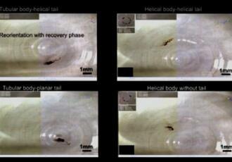联邦理工学院研究员研发出一种柔性机器人,可在体液中游动