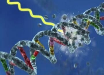 索尔克研究人员揭示细胞反应系统可精确区分DNA损伤和外源DNA损伤