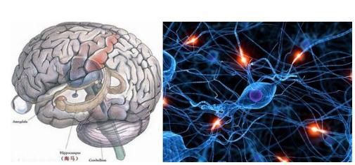 痒、疼痛敏感性个体差异的神经指标与神经环路机制
