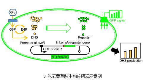 生物传感器最新研究进展:转录组辅助的代谢物感应策略