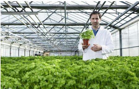 以色列农业开放日展示农业创新成果与新产品