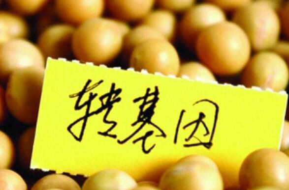《中科院与北京大学研究表明,转基因确实有害》文章所言是否属实?