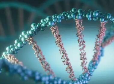 DNA编码分子库:可迅速筛选能与疾病相关蛋白结合的分子