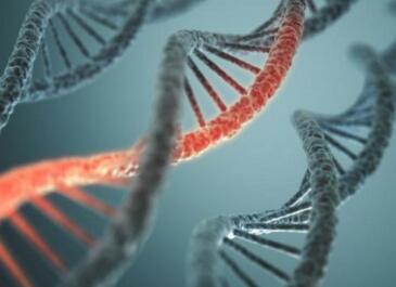 BRCA1基因突变:除了乳腺癌和卵巢癌,还与哪些疾病有关