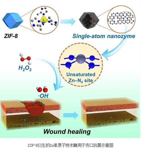 ZIF-8衍生的Zn单原子纳米酶用于伤口抗菌