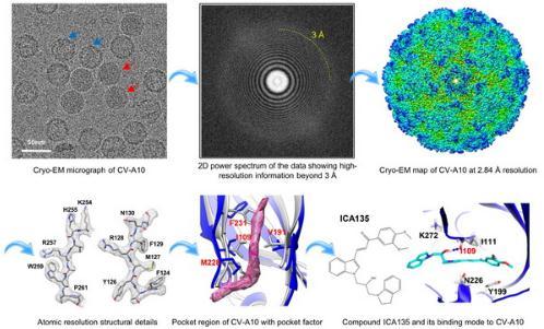 人柯萨奇病毒VP1疏水口袋中脂质pocket factor的结构