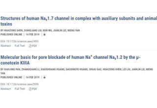 颜宁教授团队发表论文:其中Nav1.7突变成为研发新型止痛剂的靶标