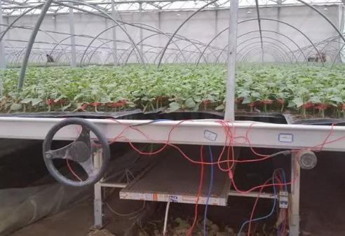 石墨烯远红外电暖加温在蔬菜集约化育苗中应用效果如何?