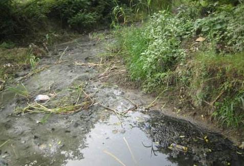 分散式农村生活污水处理技术探讨