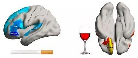吸烟有害身体健康!关于吸烟的危害研究进展与结论