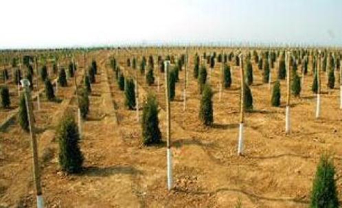 碳汇:中国等国的中国在植树造林和集约农业对固碳具有重要作用