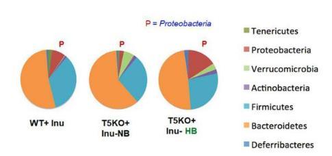 菊粉是什么?菊粉等可溶性膳食纤维真会引发肝癌吗?
