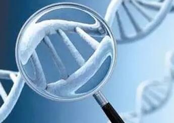 SUN5:一种导致男性不育的无头精子症致病基因
