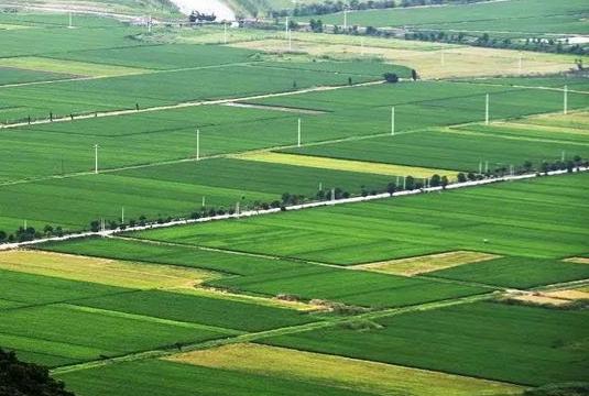 质量兴农中央一号文件发布 中国农林废弃物利用技术与发展大会将在杭州召开